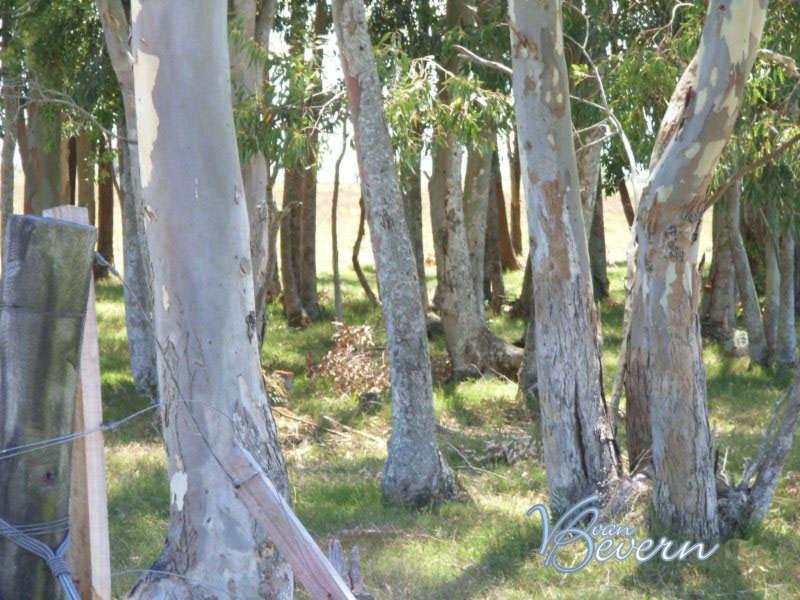 287 acres of pastureland in Rocha - drl901