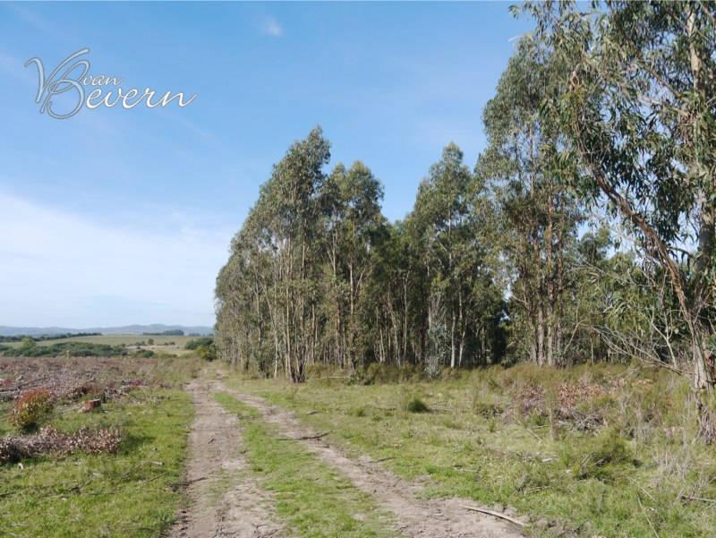 25 ha unbebaut, in ländlicher Lage – SLL391