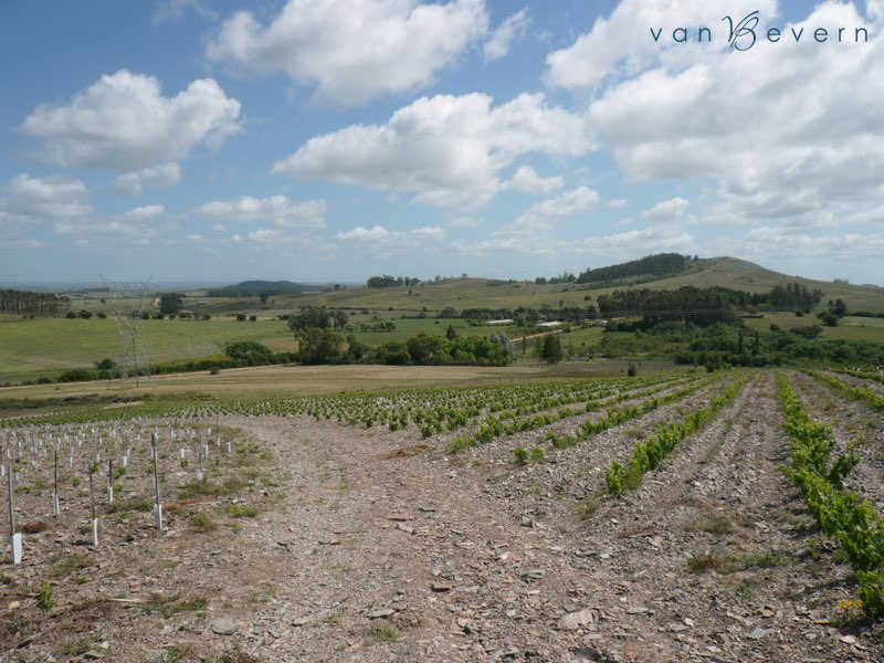 25 acres vineyard in Sierra Carapé - SCL308