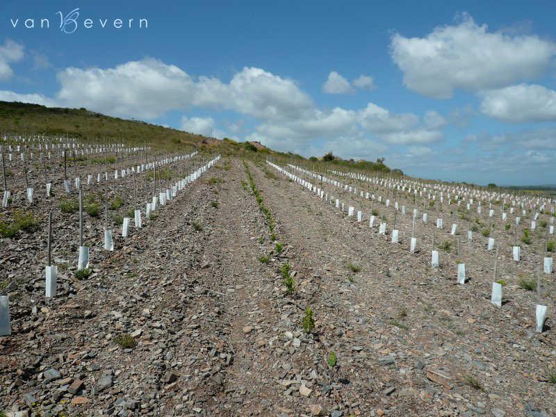 25 acres vineyard in Sierra Carapé - SCL308