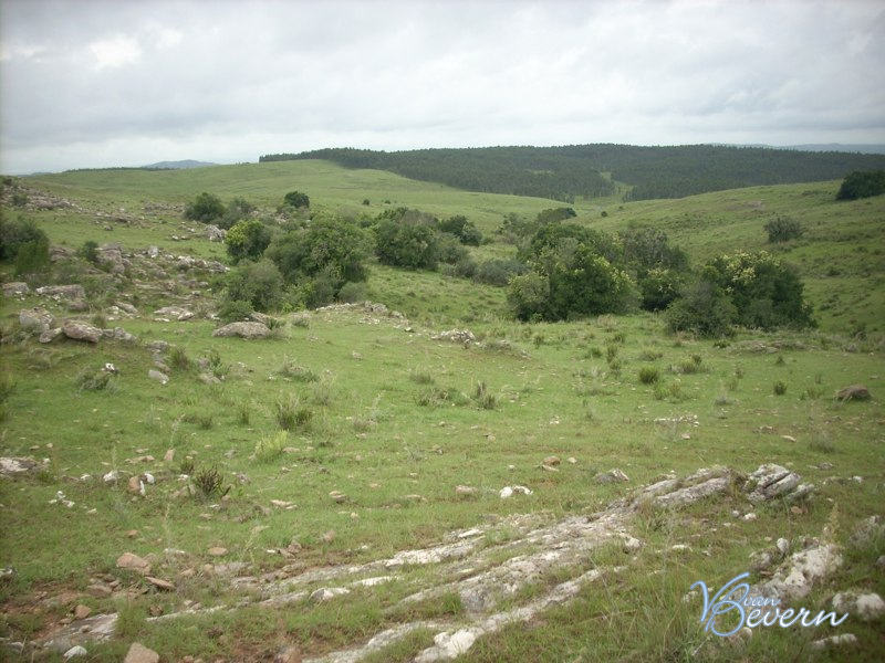 289 acres of grassland in Lavalleja - AIL419