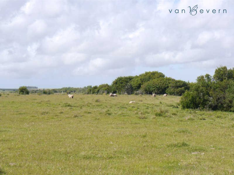 139 acres of prime pastureland near Garzón - GAL447