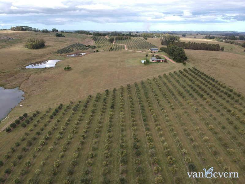 Chacra de 39 ha con plantación de olivos - RTC609