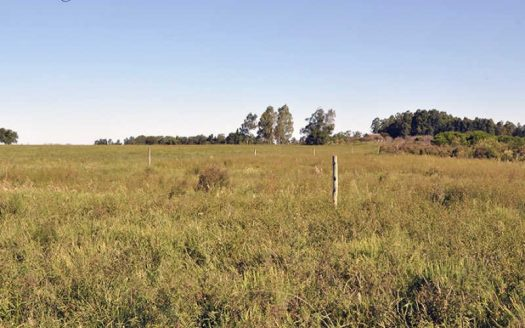 25 acres of land in Blancarena, department of Colonia - DCA709