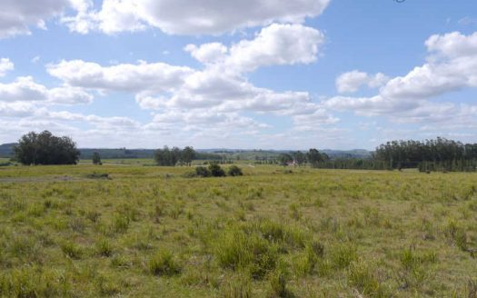 Three undeveloped 12 acres chacras on Ruta 12 - RDC612