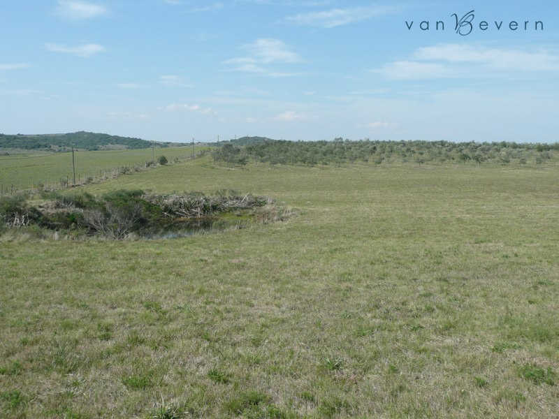 35 acres chacra with olive plantation - rtl534