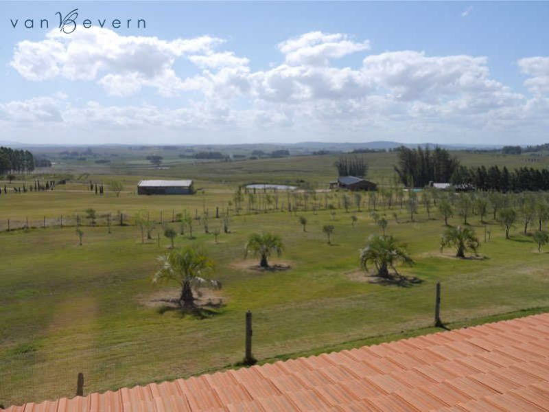 12 acres chacra with small olive grove near Punta Ballena - RDC608