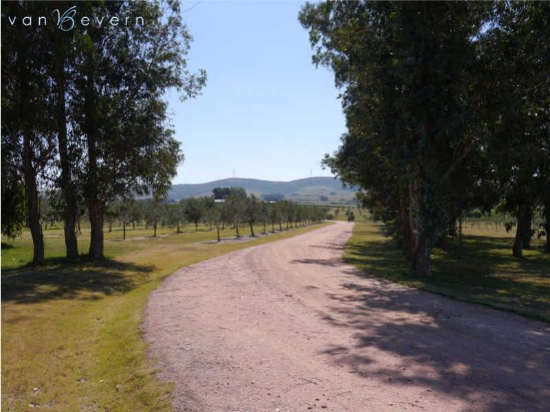 96 acres chacra with olive tree plantation - RTC609