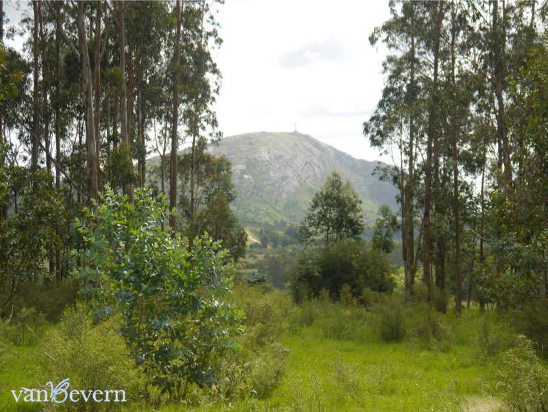 Unbebaute 5 ha große Chacra bei Piriápolis – PIC915