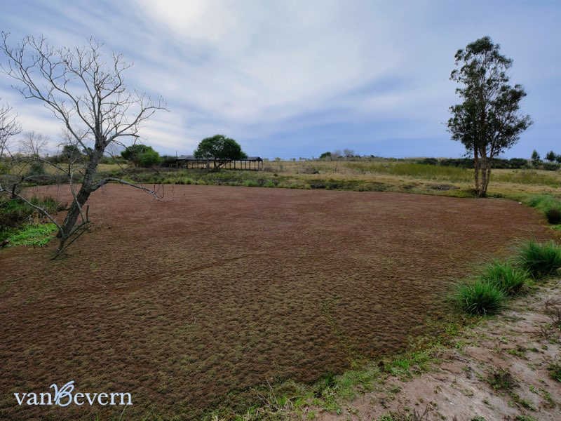 Self-sustainability opportunity: 11.6 acres farm with olive tree plantation - PDC926