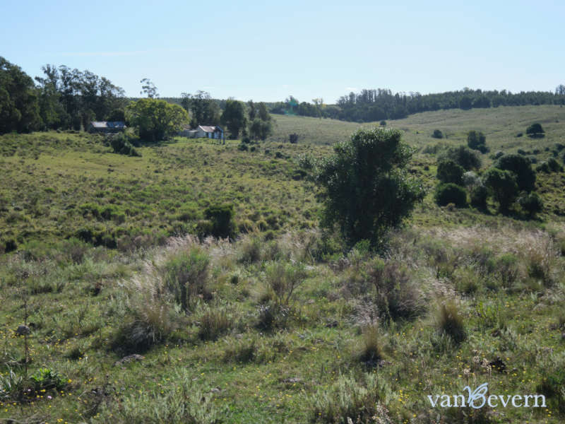 452 acres of land with a large forested area near Minas - MIL017
